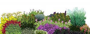 сад лекарственных трав и растений