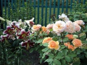 природная защита для растений