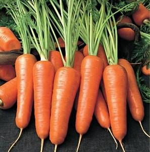 морковь осенняя посадка