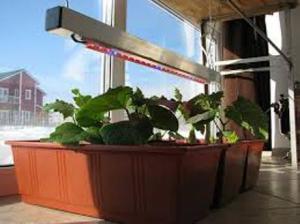 Досвечивание при выращивании огурцов зимой дома