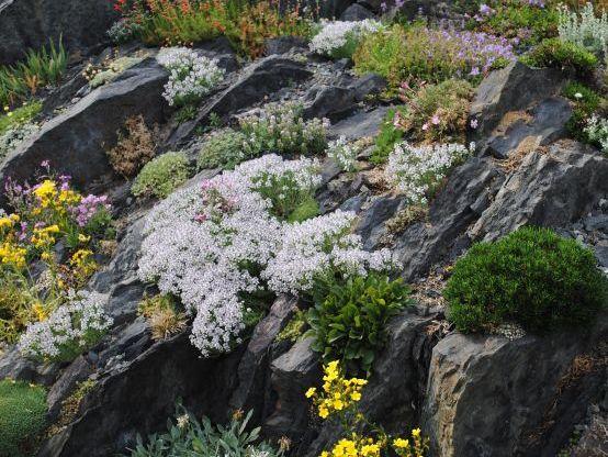 посадка  альпийских растений