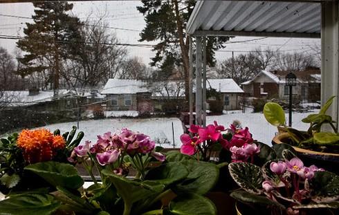 свет для комнатных растений зимой