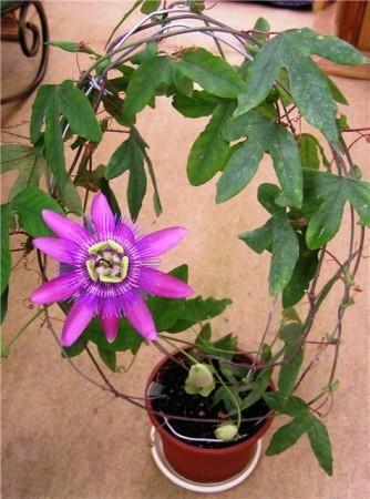 удивительно интересные цветки завораживают