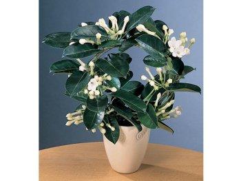 Прекрасное растение на южном окне