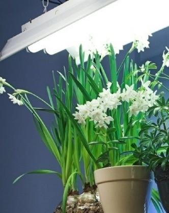 Режим освещения позволяет ускорить или замедлить цветение