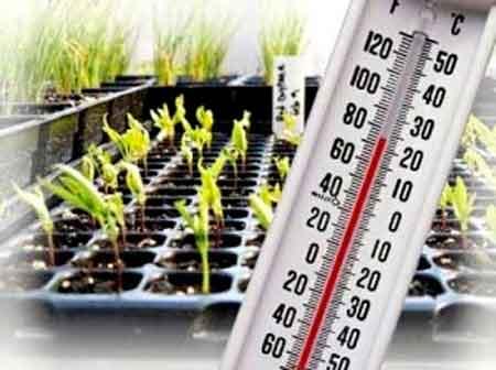 температура оказывает большое влияние на выгонку растений