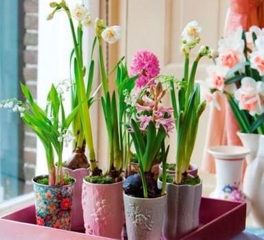 для выгнки подходят самые различные растения