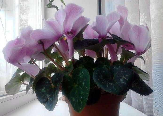 Цветы комнатные для северного окна