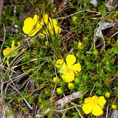 Редкие растения Австралии