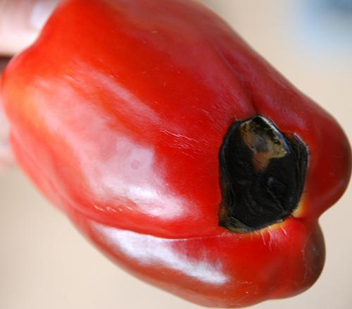 Болезни сладкого перца