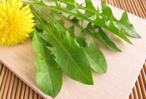 Из листьев одуванчика готовят витаминные салаты