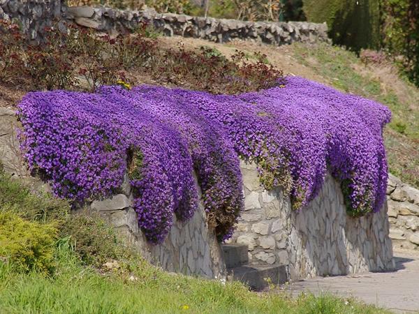 Голубые цветы обриеты Блю Кинг
