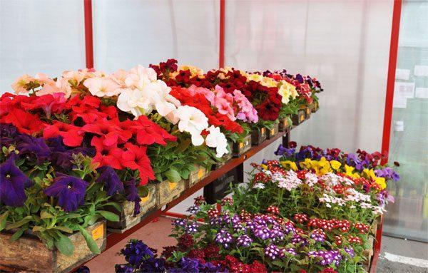теплица для выращивания цветочной рассады