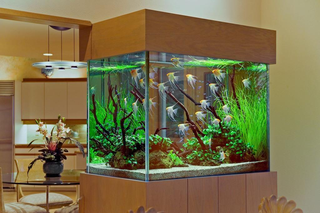 akvarium-na-kuhne
