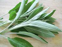 шалфей лекарственный листья