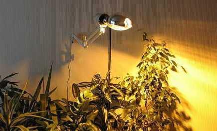 искууственная подсветка комнатных растений