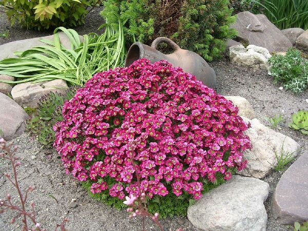 лучшие цветы для альпийской горки