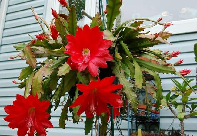 красивейшее растение требующее подставки