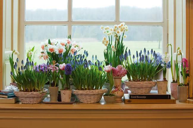 растеня для дома цветущие зимой