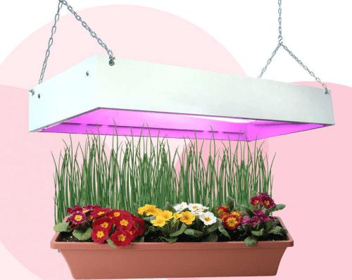 Для выращивания в домашних условиях рассады нужно дополнительное освещение