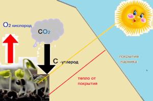 Растения в парнике защищены от заморозков, ветра и палящего солнца