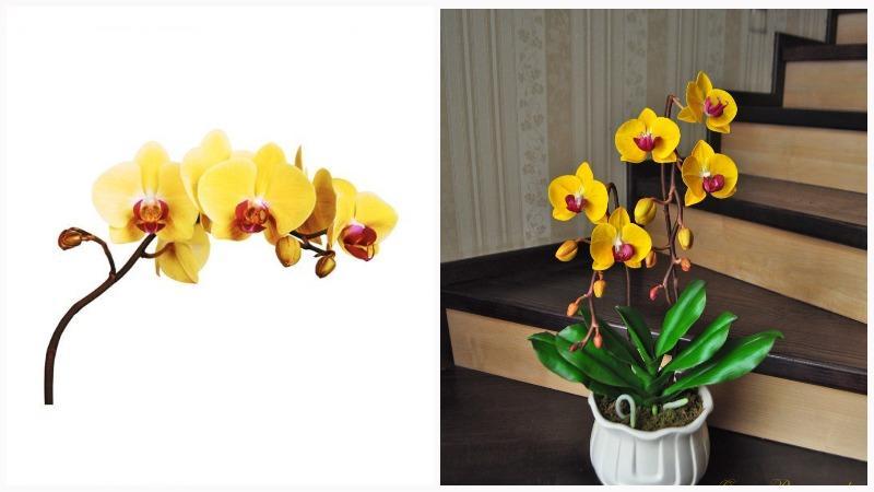 Механизмы опыления у орхидей отличаются разнообразием